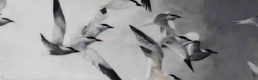 Flight of Terns  A LR