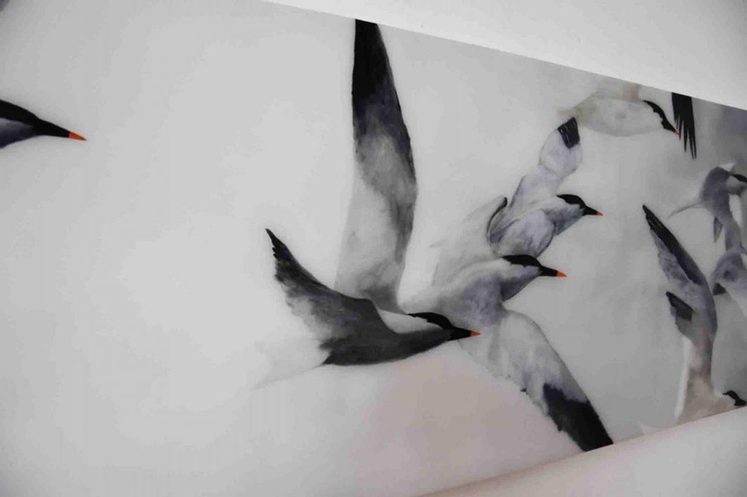 Flight of Terns  D LR