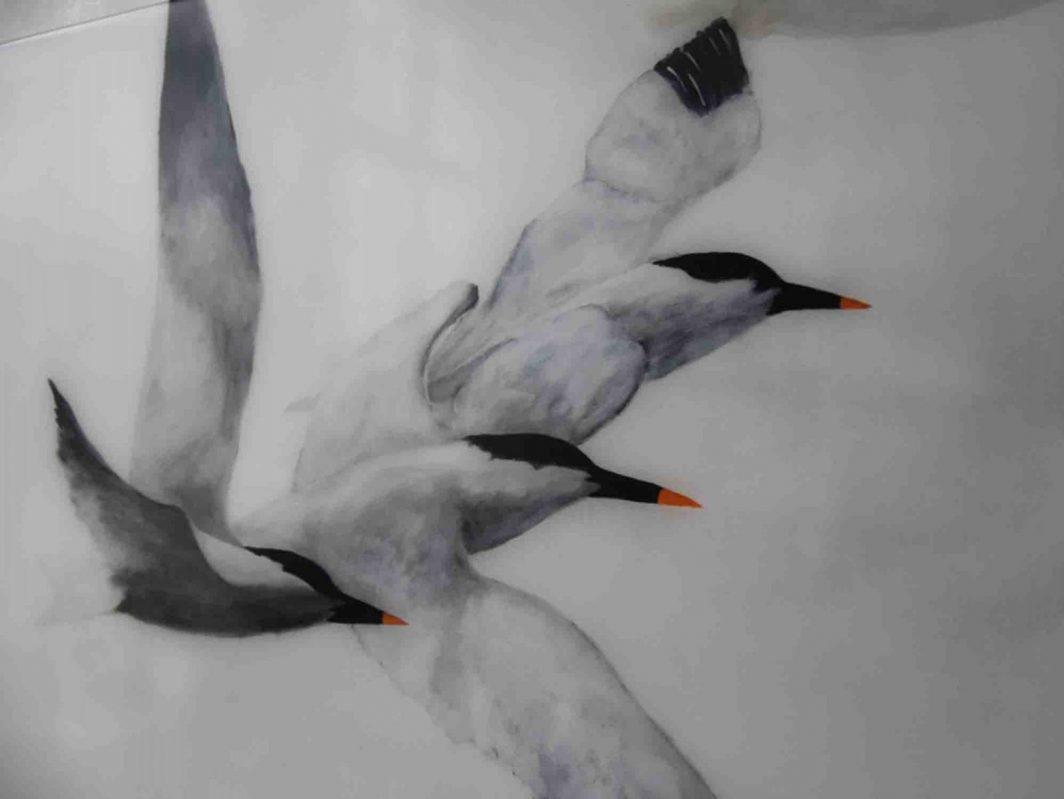 Flight of Terns  E LR