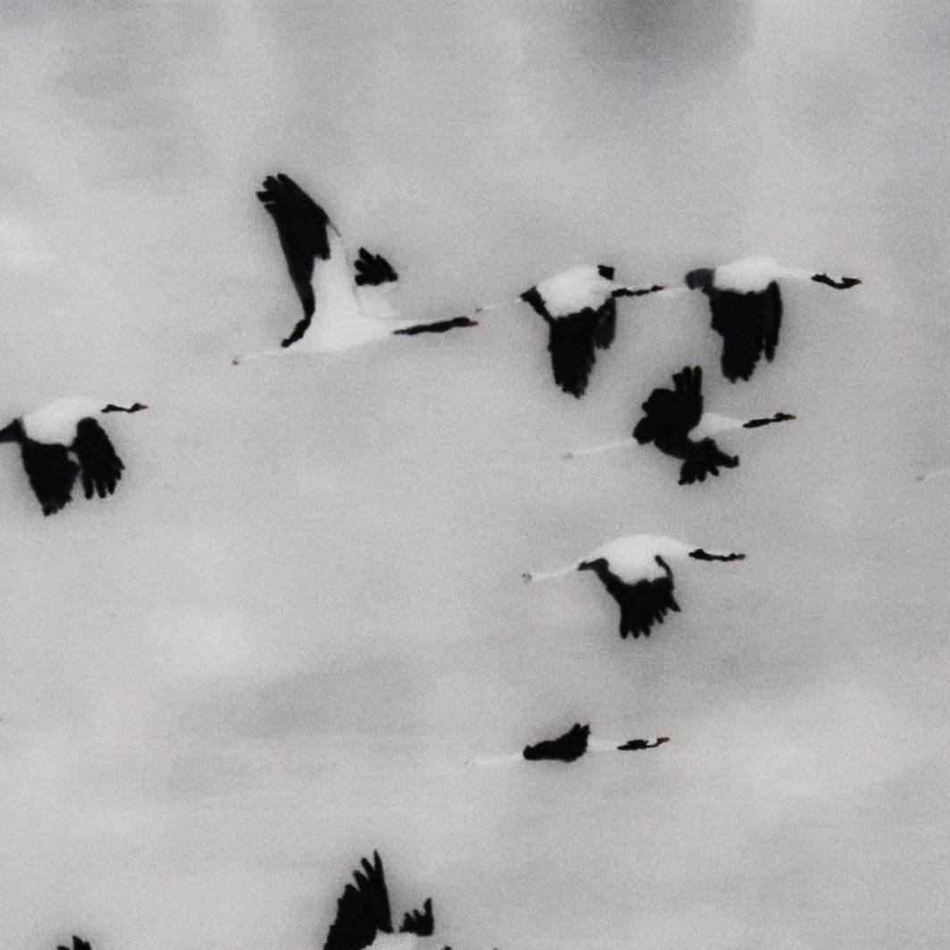 Kraanvogels Kunstwerk Artwork