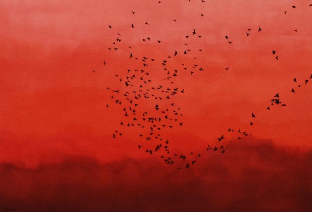 Starlings  LR B